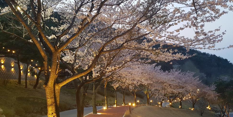 나인밸리파크의 봄